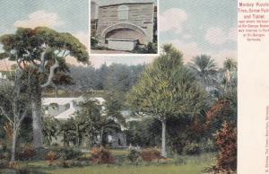 Monkey Puzzle Tree , Screw Palm & Tablet , ST GEORGES , Bermuda , 1901-07