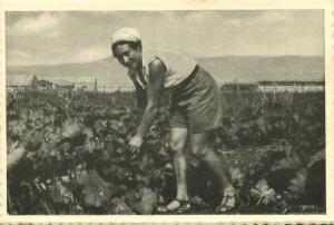 israel palestine, GVAT גבת, Kibbutz, Vegetable Garden 1930s Tmunia Postcard 180