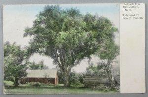 Shattuck Elm, East Jaffrey NH 1911 Postcard (#7173)