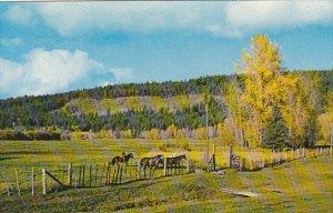 Canada Cariboo Ranch Williams Lake British Columbia Alberta