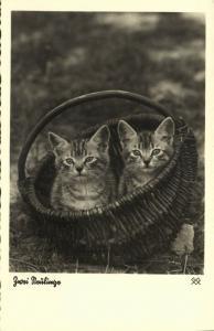 Cat Postcard Kittens (1930s) RPPC (2)