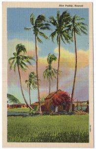 Hawaii, Rice Paddy