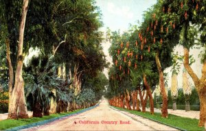 California Typical Country Road With Pepper Trees