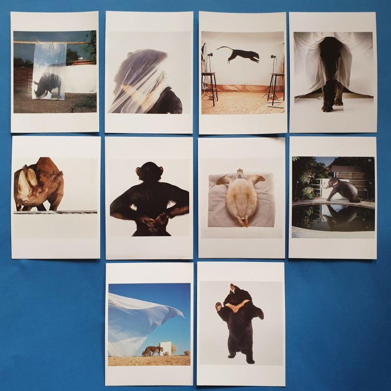 Set of 10 New Postcards Survivors, Endangered Wildlife, Animals by James Balog