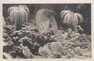 RP: NAPOLI , Italy , 1900-10s ; Acquario - Sea-Anemone