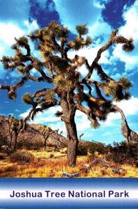 California Joshua Tree National Park