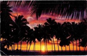 Sunset Through Palms Hawaii Vintage Postcard Standard View Card