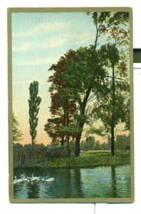 Postcard Beautiful Nature Scene Ducks Trees Pond Gold Border ME3.