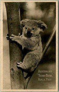 Vintage SYDNEY Australia RPPC Real Photo Postcard KOALA PARK Teddy Bear Unused