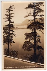 Fir Trees, Columbia River OR