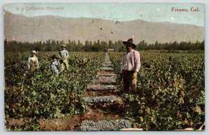 Fresno~Workers in a California Vineyard~Vine Dresser & Boys~Grapes~1909 Postcard