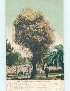 Pre-Chrome CALIFORNIA TREE Postmarked San Diego California CA AH6736