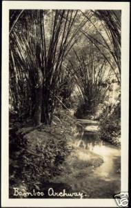 Trinidad, Bamboo Archway (1930s) RPPC