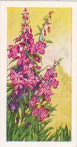 Glengettie Trade Card Wild Flowers No 6 Rosebay Willow-Herb