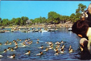 TARPON SPRINGS FL - boys-retrieving the Cross from Spring Bayou 1960s