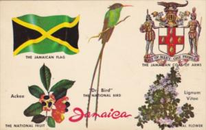 Jamaica National Bird Fruit Flower Coat Of Arms & Flag