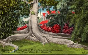Florida Fort Myers Moreton Bay Fig Tree Thomas A Edison Winter Home 1961
