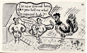 Humor - Rooster to Hens-- I'm new around here…