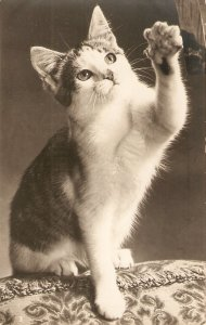 Kiten reaching up with paw Lovely old vintage English postcard