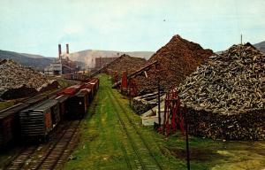 Maine Rumford Paper Mill Pulpwood Piles