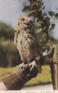 Savigny's Owl, Jarrold Zoo Animal Series, 1940-60s