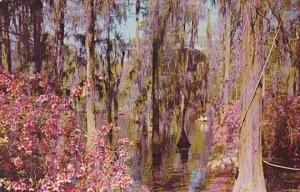 South Carolina Charleston Cypress Gardens 1971