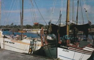 Sponge Fishing Boats in the harbor, TARPON SPRINGS, Florida, 40-60s