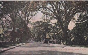 Massachusetts Beverly Historic Elm Trees On Hale Street