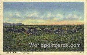 Herd of Caraboas Philippines Unused