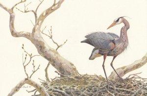 Great Blue Heron , 1960-80s