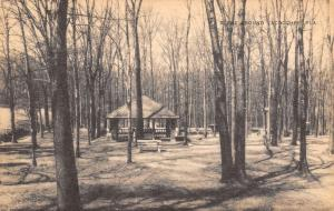 Lacoochee Florida~Lone Cabin in Woods~Bare Trees~1930s Sepia Litho Postcard