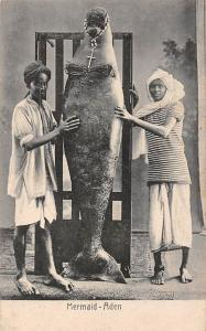 Yemen Aden Mermaid Sirene Capture, Pinniped Seal