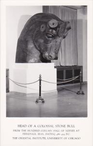 RP; Head of a Colossal Stone Bull from the Hundred Column Hall of Xerxes at P...
