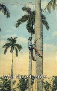 Trepando a una Palms Republic of Cuba Unused