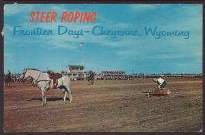Steer Roping,Frontier Days,Cheyenne,WY Postcard BIN
