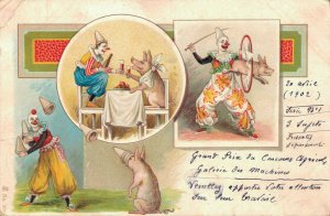 Circus Clowns With Pigs Litho Postcard Funny 03.74