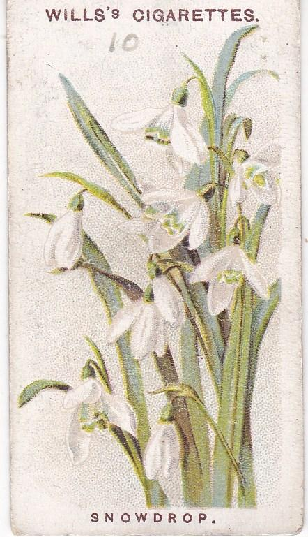 Cigarette Card Wills Old English Garden Flowers 2nd Series No 10