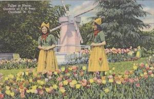 North Carolina Charlote Tulips In Bloom Gardens Of J B Ivey