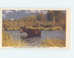 Unused 1930's MOOSE IN VERMILLION LAKE Banff National Park Alberta AB F3728