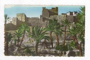 RP   Morocco (South), 20-40s  Kasbah et palmeraie