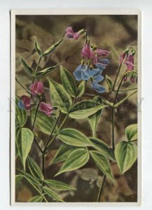 428066 Flower Lathyrus vernus Vintage Sammelwerk Tobacco Card w/ ADVERTISING