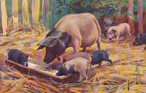 Pigs Feeding Time Ernest Linzell