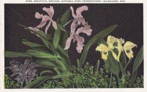MILWAUKEE, Wisconsin, 00-10; Rare, Beautiful Orchids, Mitchell Park Conservatory