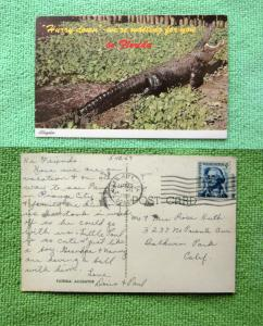 Florida Alligator Postcard Reptile Hurry Down We're Waiting For You