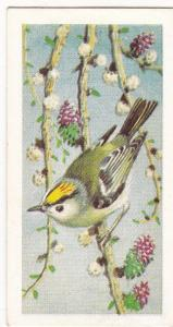 Trade Card Brooke Bond Tea Wild Birds in Britain 15 Goldcrest