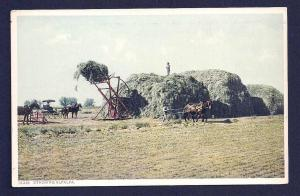 Stacking Alfalfa unused c1910