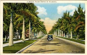 FL - Royal Palms along the Drive