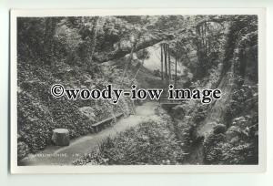 iw0176 - Shanklin Chine , Isle of Wight - postcard by Dean