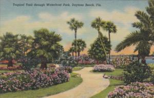Florida Daytona Beach Tropical Trail Through Waterfront Park Curteich