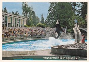 KIller Whale Jump , Vancouver , B.C. , Canada , 50-70s